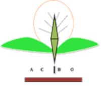 Amani CBO logo