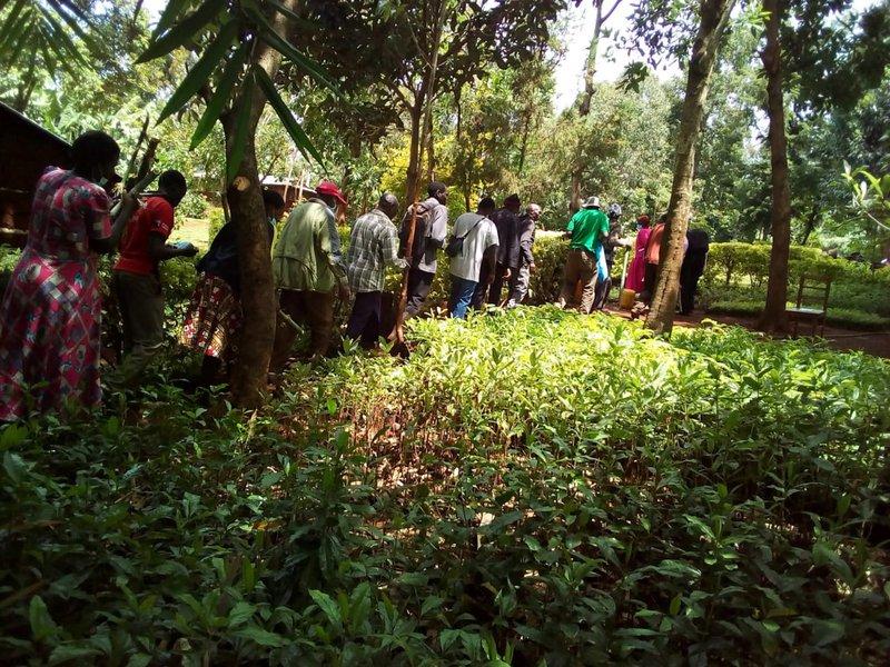 Amani CBO: Self Help Groups training on Bamboo tree nursery management