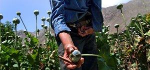afghanistan-poppy-field-7216920538-p.jpg