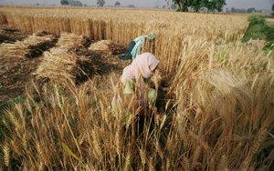 bangladesh-farming-14114340279-p.jpg