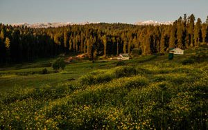 kashmir-meadow-15170630218-p.jpg