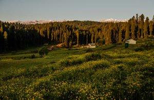 kashmir-meadow-15170630218-p.jpg