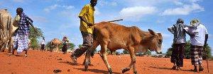 kenya-livestock-13411090734-p.jpg