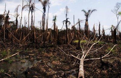 niger-delta-oil-spill-4560583670-blog.jpg