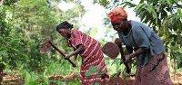 uganda-famring-6521597667-p.jpg