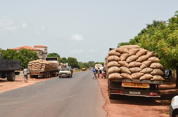 Guinea Bissau is extremely poor and relies heavily on harvesting cashew nuts and other crops. Image credit: jbdodane.